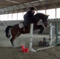 Navarone (Jus de Pomme x Armstrong) jumping   with Makenzi